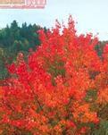 【专栏】秋的意境