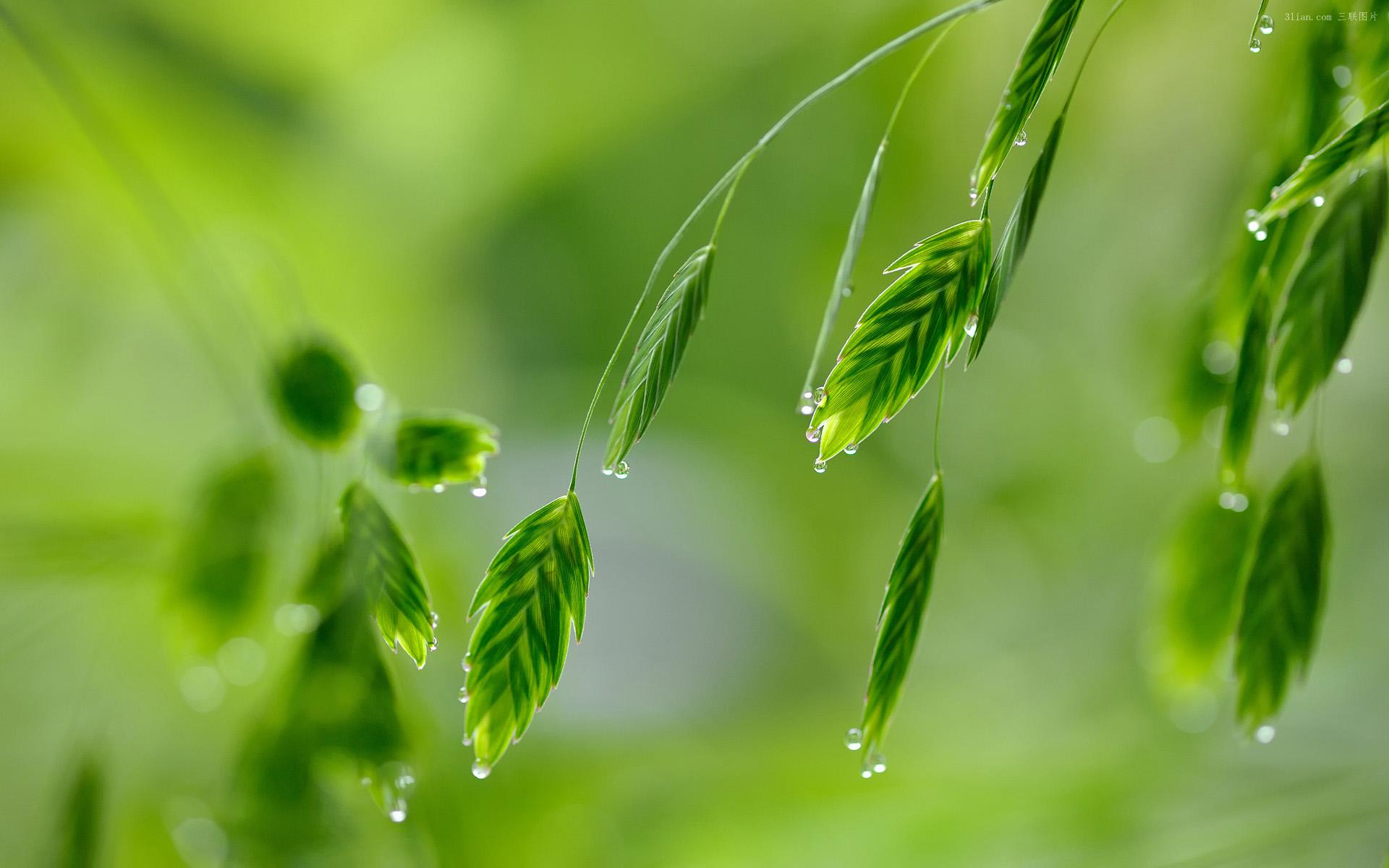【檀香】雨已远,爱依旧(诗组)